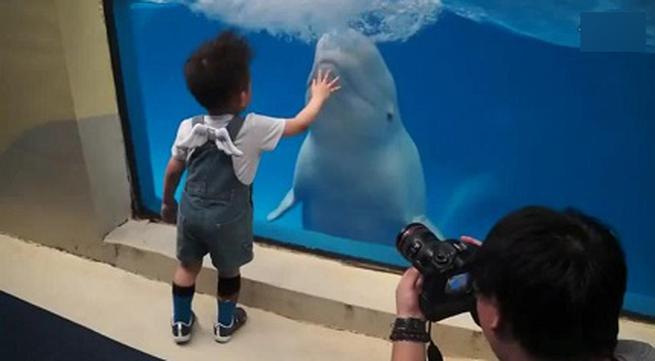 Cá voi tinh nghịch trêu đùa em bé